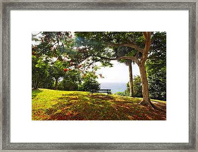 Bench Under A Flamboyan Tree Framed Print by George Oze