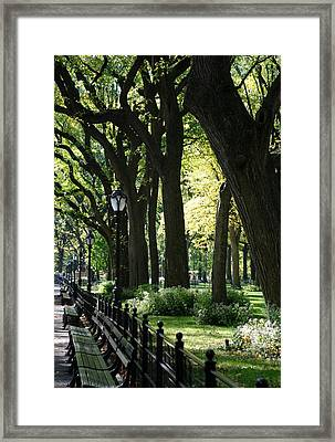 Benches Trees And Lamps Framed Print by Rob Hans