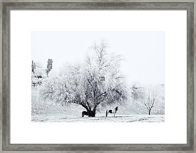 Beneath A Frosty Canopy Framed Print by Mike  Dawson