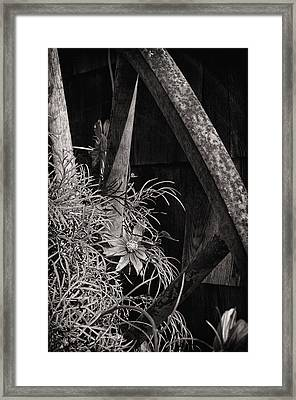 Beneath The Wheel Framed Print by Susan Capuano