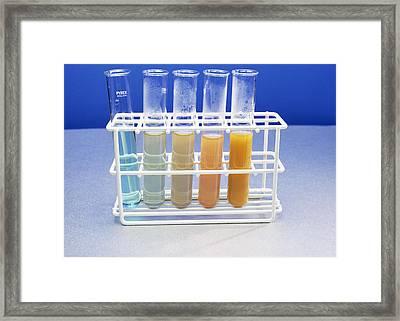 Benedict's Test For Sugars Framed Print