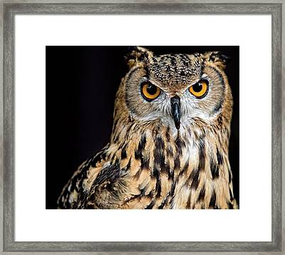 Bengal Eagle Owl Stare Framed Print by Andrew JK Tan