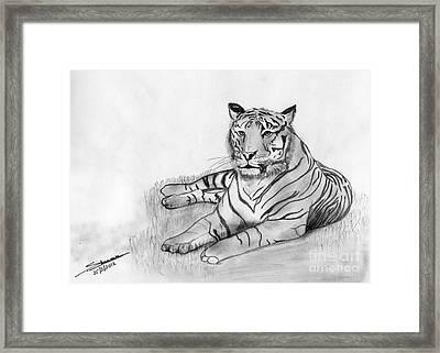 Bengal Tiger Framed Print by Shashi Kumar
