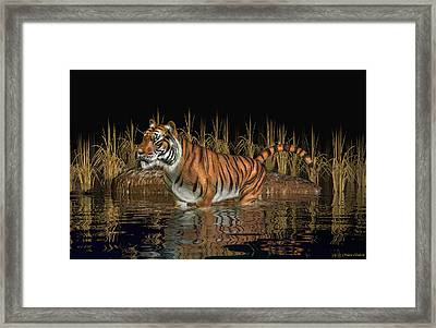 Bengal Tiger Framed Print by Walter Colvin