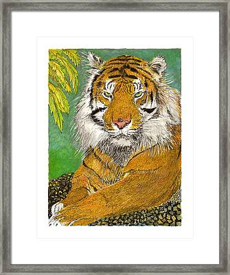 Bengal Tiger With Green Eyes Framed Print by Jack Pumphrey