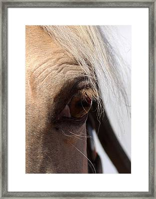 Benson Mule Days Framed Print by Travis Truelove