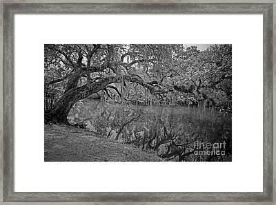 Bent Oak River Reflection Framed Print by Larry Nieland