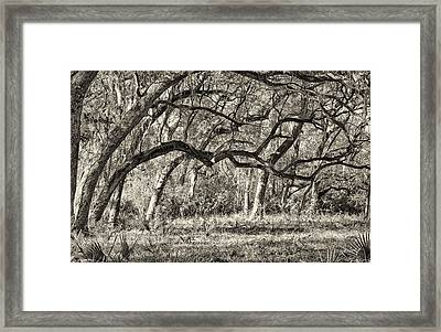 Bent Trees Sepia Toned Framed Print by Phill Doherty