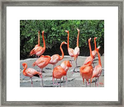 Framed Print featuring the digital art Bermuda Flamingos by Richard Stevens
