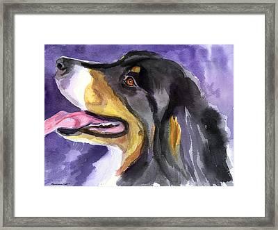 Berner Portrait Framed Print