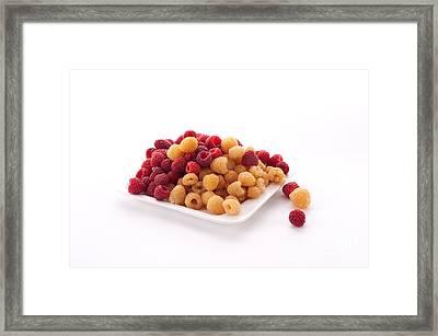 Berries Framed Print by Catherine Lau