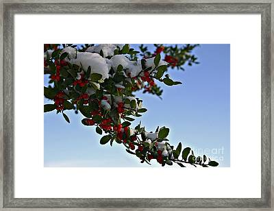 Berries In Snow Framed Print
