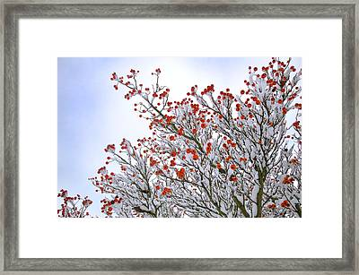 Berries Framed Print by Lisa Williams