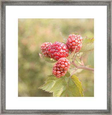 Berry Good Framed Print by Kim Hojnacki