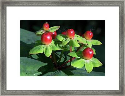 Berry Pretty Framed Print