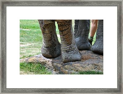 Best Foot Forward Framed Print by Joanne Kocwin
