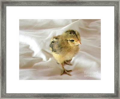 Best Foot Forward Framed Print by Susan  Clark