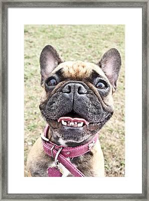 Framed Print featuring the photograph Best Friend by Jeannette Hunt