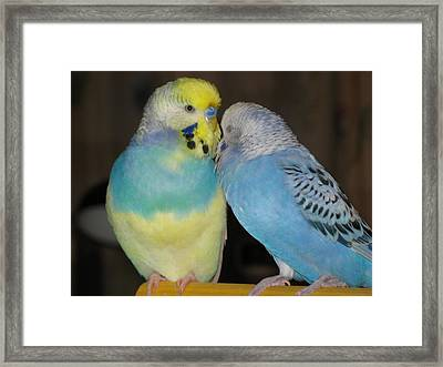 Best Friends Framed Print by Kimberly Mackowski