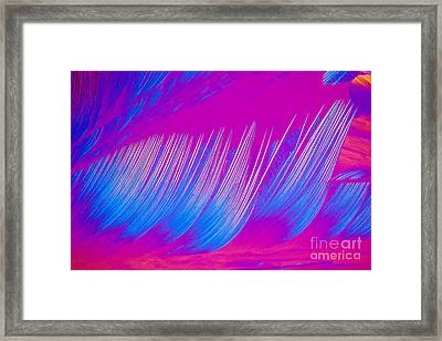 Beta-carotene Crystal Framed Print by Michael W. Davidson