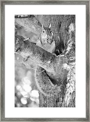 Betsy Framed Print by Lynda Dawson-Youngclaus