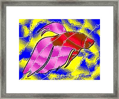 Betta Framed Print by Stephen Younts