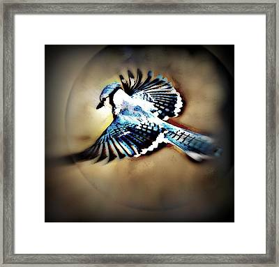 Betty Bluejay Framed Print by YoMamaBird Rhonda
