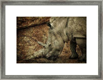 Between A Rock And A Hard Place Framed Print by Fiona Messenger