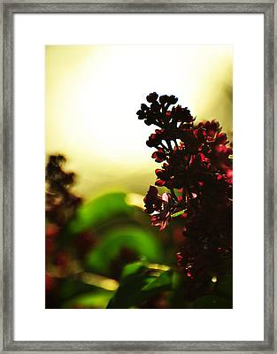 Between Me And The Sun Framed Print by Rebecca Sherman