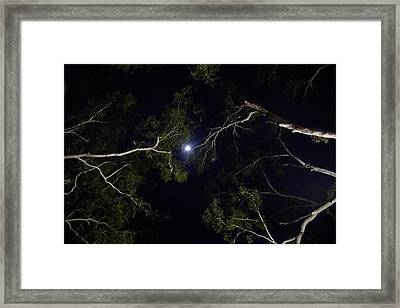 Framed Print featuring the photograph Between The Gums by Carole Hinding
