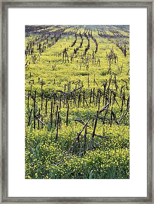 Between The Lines II Framed Print by JC Findley
