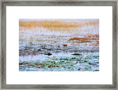 Beware Of Still Waters Framed Print by Jan Amiss Photography
