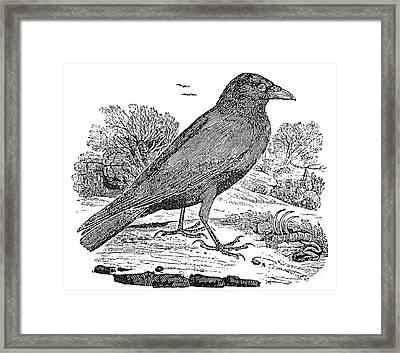 Bewick: Raven Framed Print