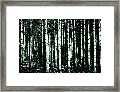 Beyond The Trees Framed Print by Terrie Taylor