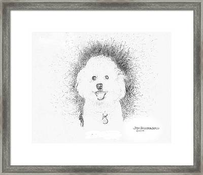 Framed Print featuring the drawing Bichon Frise by Jim Hubbard