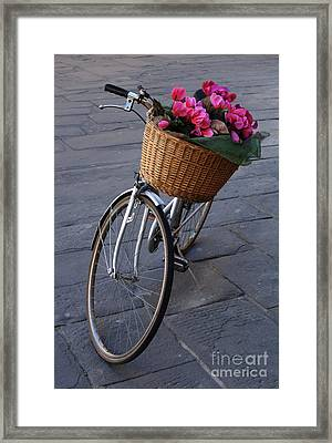 Bicycle In Lucca Italy Framed Print
