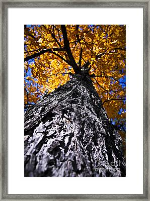 Big Autumn Tree In Fall Park Framed Print