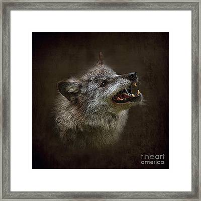 Big Bad Wolf Framed Print by Louise Heusinkveld