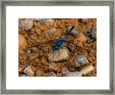 Framed Print featuring the photograph Big Blue by John Burns