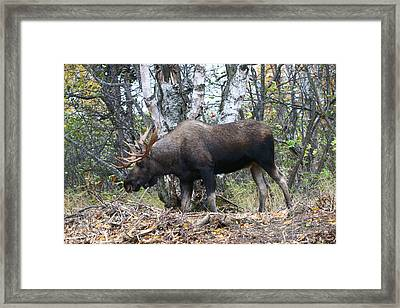 Framed Print featuring the photograph Big Body by Doug Lloyd