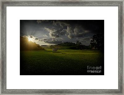 Big Buck In Field At Sunset Framed Print by Dan Friend