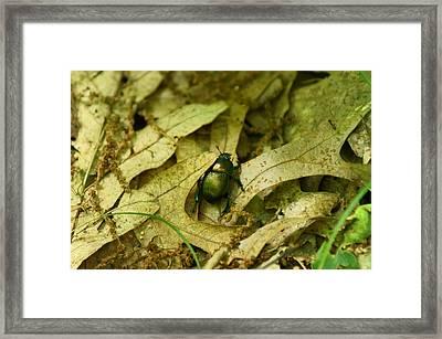 Big Bug Framed Print by Jennifer Kosminskas