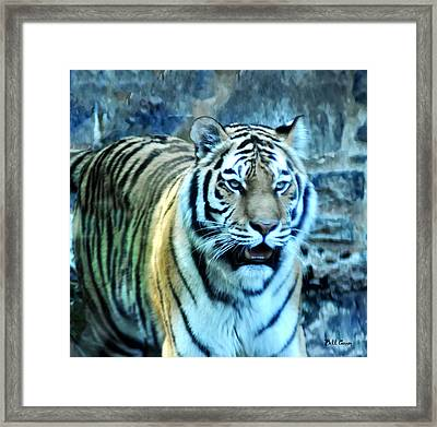 Big Cat Framed Print by Bill Cannon