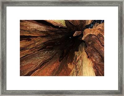 Big Cedar Framed Print