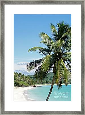 Framed Print featuring the photograph Big Corn Island Palm Tree Nicaragua by John  Mitchell