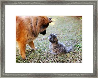 Big Dog, Small Dog Framed Print by Daniela Duncan