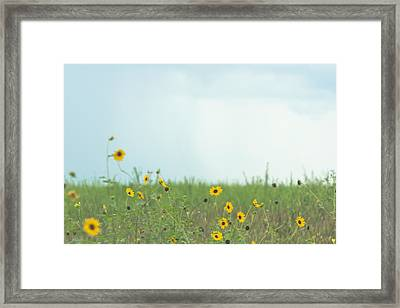 Big Eyed Susan In Watercolored Summer Framed Print by Ellie Teramoto