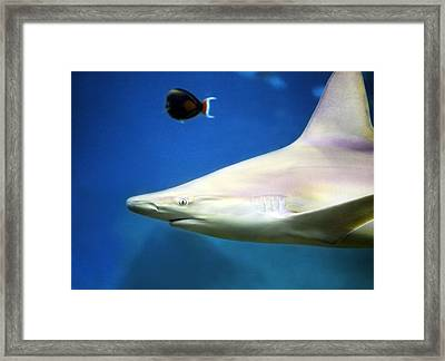 Big Fish Little Fish Framed Print by Marilyn Hunt