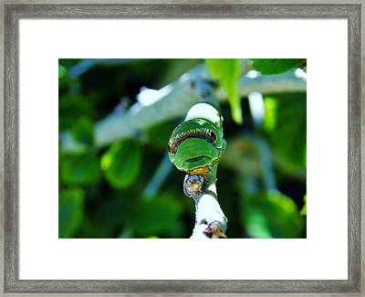 Big Green Caterpillar Framed Print
