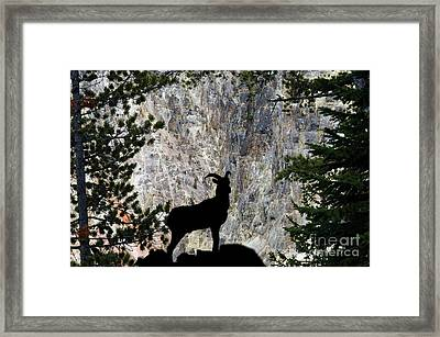 Framed Print featuring the photograph Big Horn Sheep Silhouette by Dan Friend